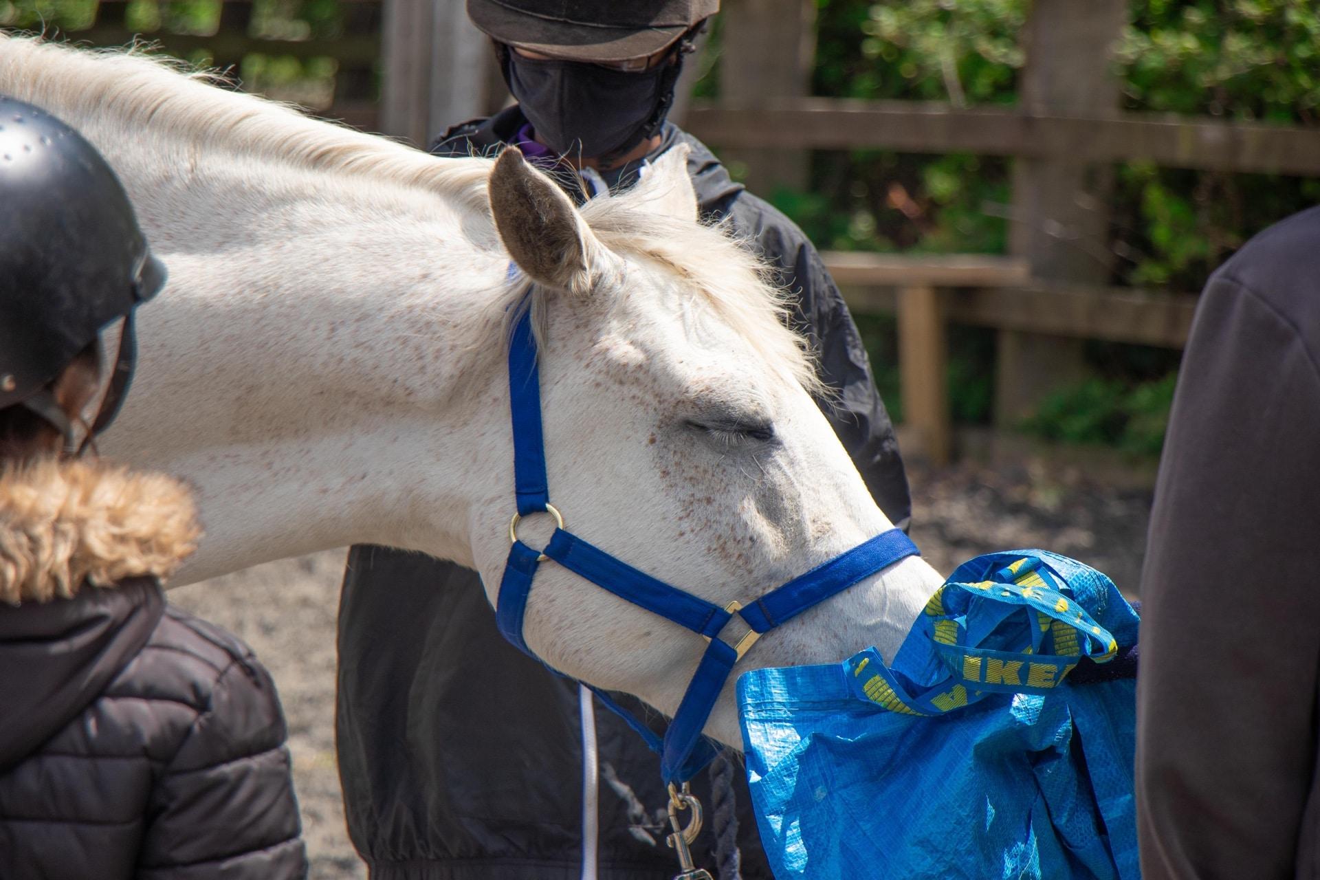 Strength Through Horses Campaign